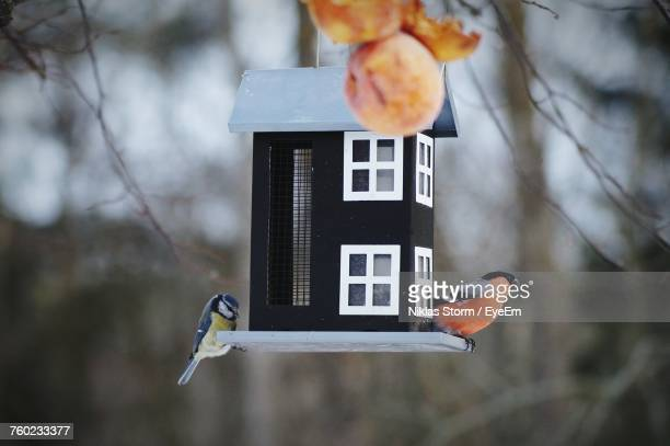 close-up of bird perching on feeder - birdhouse stock photos and pictures