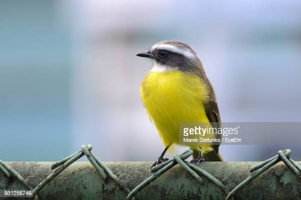 close-up of bird perching on fence - marek stefunko imagens e fotografias de stock