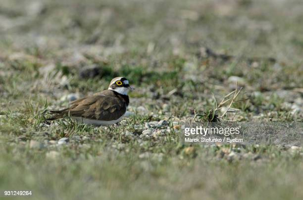 close-up of bird perching on field - marek stefunko stockfoto's en -beelden