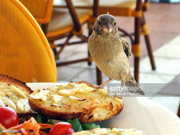 close-up of bird perching on food in plate - barulho stock pictures, royalty-free photos & images