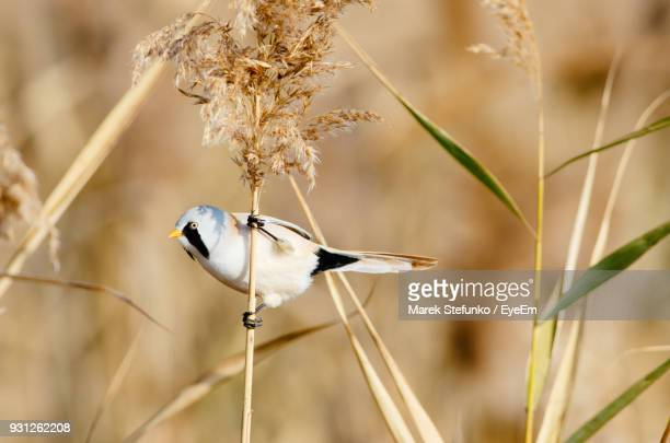 close-up of bird perching on grass - marek stefunko stockfoto's en -beelden