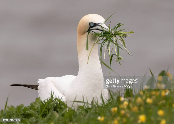 close-up of bird perching on grass,england,united kingdom,uk - bird's nest stock pictures, royalty-free photos & images