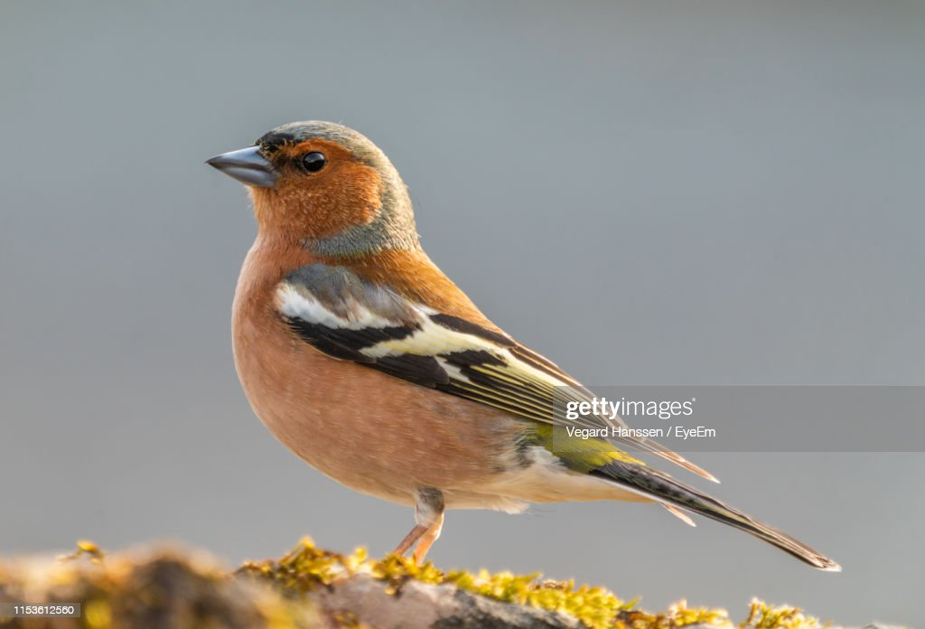 Close-Up Of Bird Perching On Grassy Field : Stock Photo