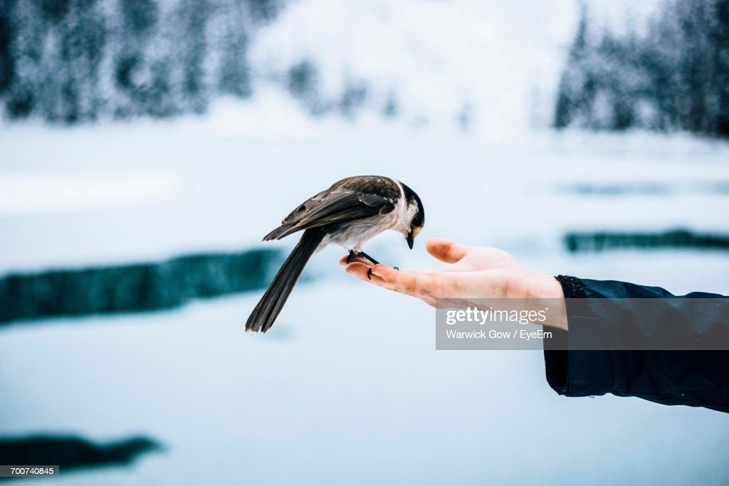 Close-Up Of Bird Perching On Human Hand : Photo