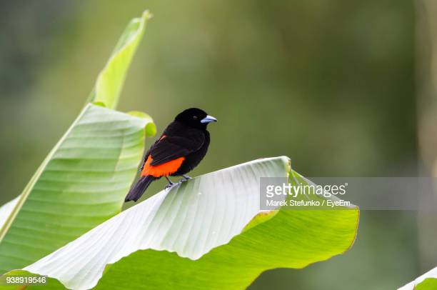 close-up of bird perching on leaf - marek stefunko stock photos and pictures