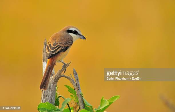 close-up of bird perching on plant - thai mueang photos et images de collection