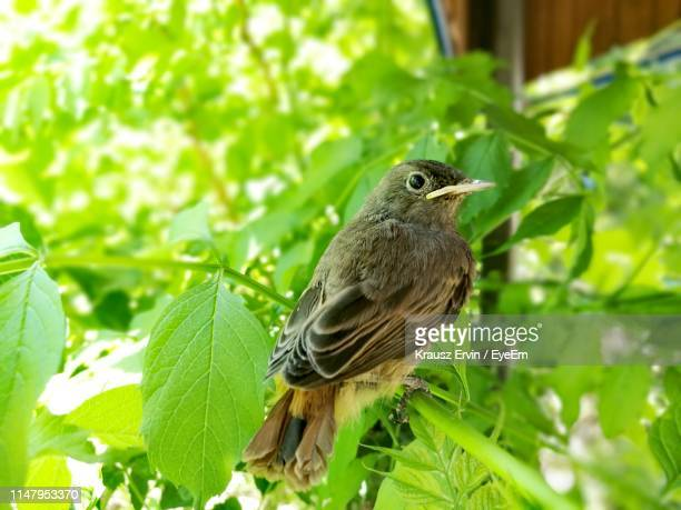 close-up of bird perching on plant - krausz stock-fotos und bilder