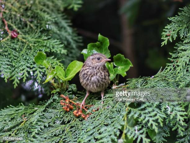 close-up of bird perching on plant - esher stock pictures, royalty-free photos & images