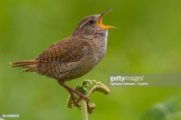 close-up of bird perching on plant - call of the wild stock pictures, royalty-free photos & images