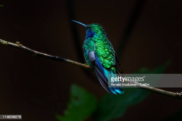 close-up of bird perching on plant stem at night - zoology stock pictures, royalty-free photos & images