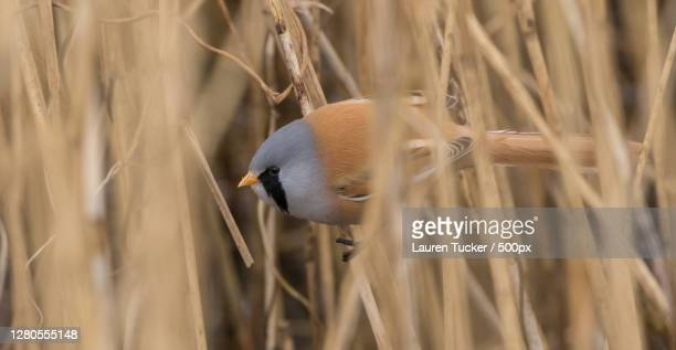close-up of bird perching on plant,devon,united kingdom,uk - wildlife stock pictures, royalty-free photos & images