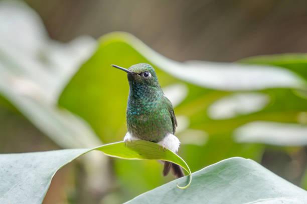 Close-up of bird perching on plant,Distrito Metropolitano de Quito,Pichincha,Ecuador