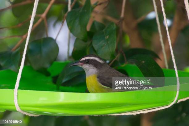Close-Up Of Bird Perching On Plastic Container