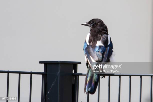 Close-Up Of Bird Perching On Railing Against Clear Sky