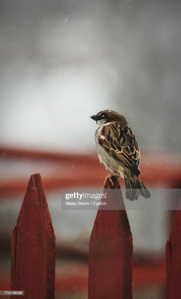 Close-Up Of Bird Perching On Railing : Stock Photo
