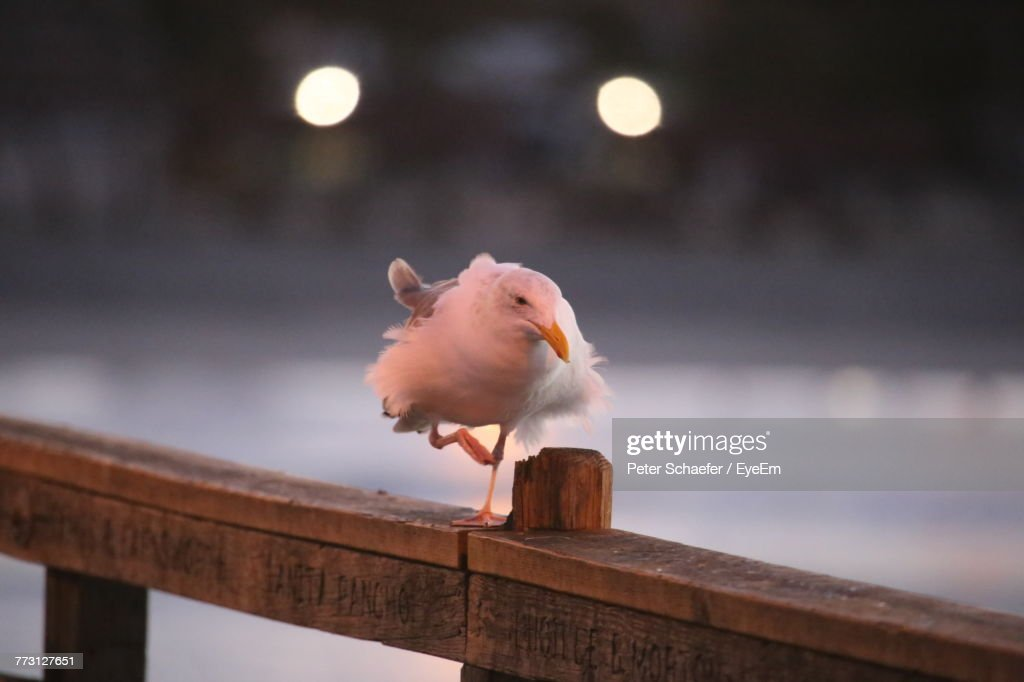 Close-Up Of Bird Perching On Railing : Photo