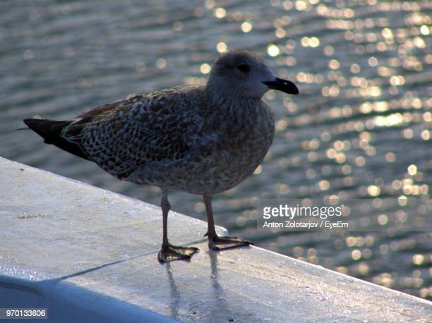 Close-Up Of Bird Perching On Retaining Wall Against Sea
