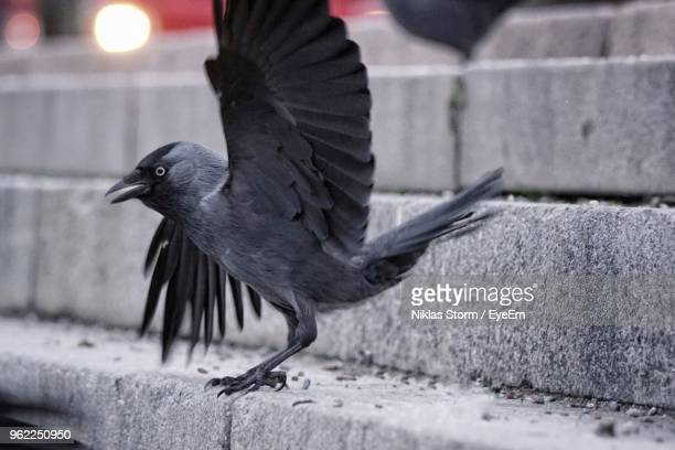 Close-Up Of Bird Perching On Steps
