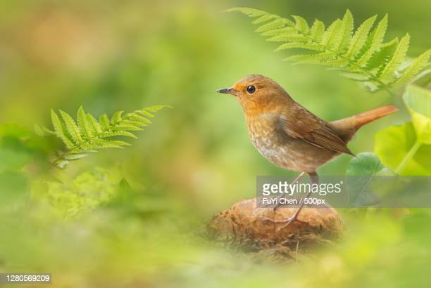 close-up of bird perching on tree - nature stock pictures, royalty-free photos & images