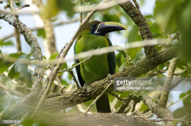 close-up of bird perching on tree - marek stefunko - fotografias e filmes do acervo