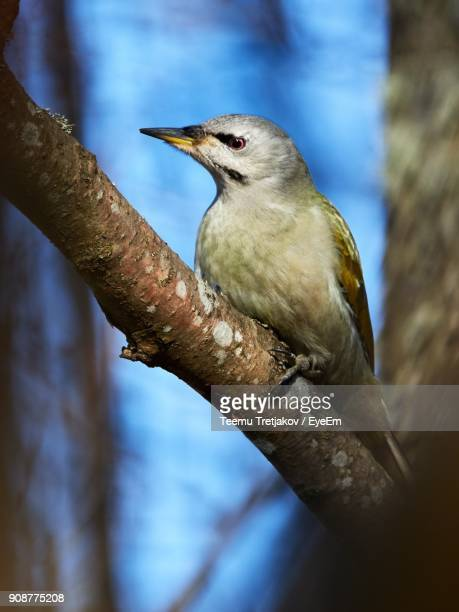Close-Up Of Bird Perching On Tree