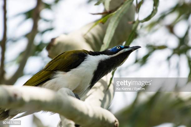 close-up of bird perching on tree - perching stock photos and pictures