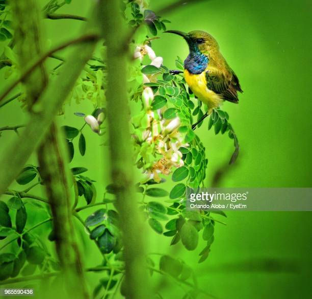 close-up of bird perching on tree - special:whatlinkshere/file:lucerne_circle,_orlando,_fl.jpg stock pictures, royalty-free photos & images