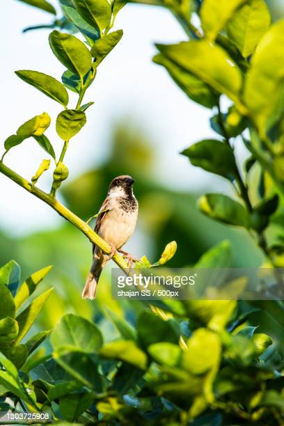close-up of bird perching on tree,mettur,tamil nadu,india - images stock pictures, royalty-free photos & images