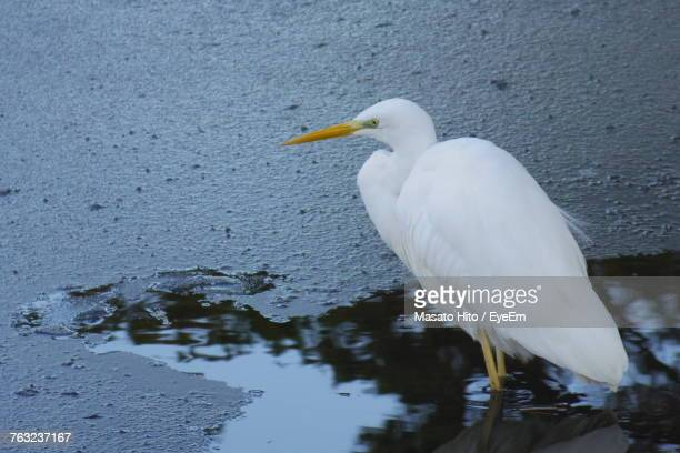 Close-Up Of Bird Perching On Water