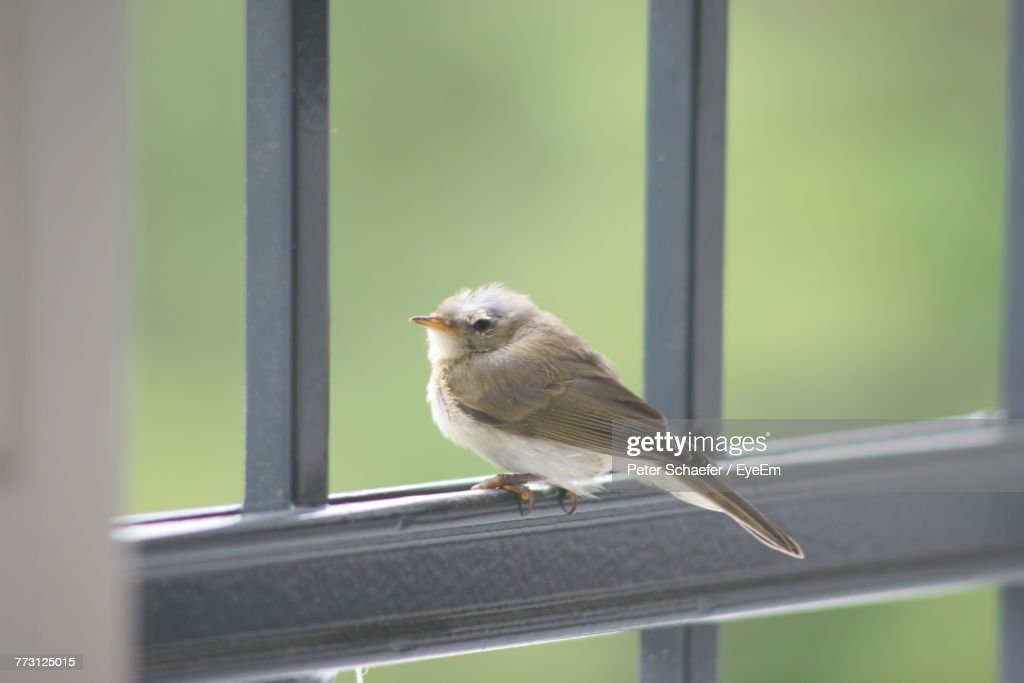 Close-Up Of Bird Perching On Window : Photo