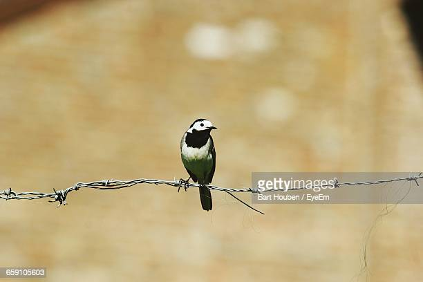 Close-Up Of Bird Perching On Wire
