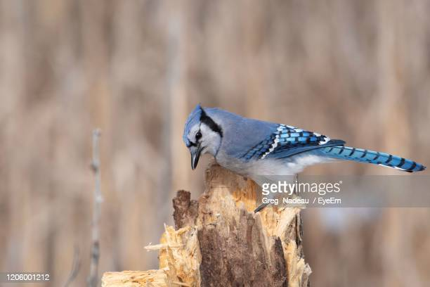 close-up of bird perching on wood - greg nadeau stock pictures, royalty-free photos & images