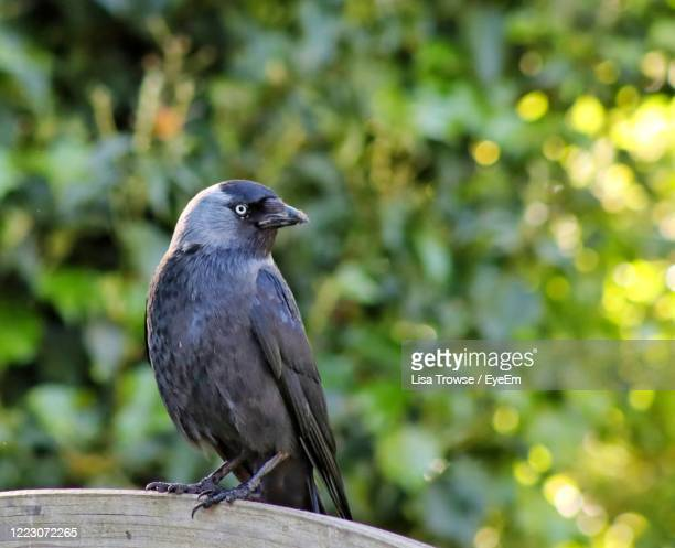 close-up of bird perching on wood - esher stock pictures, royalty-free photos & images