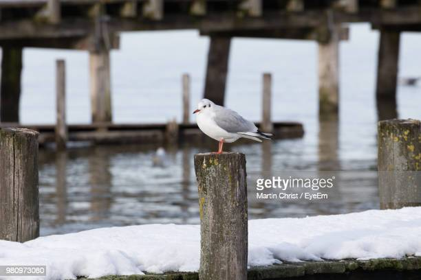 Close-Up Of Bird Perching On Wooden Post During Winter