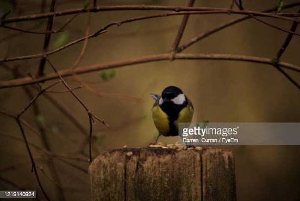close-up of bird perching on wooden post - curran stock pictures, royalty-free photos & images