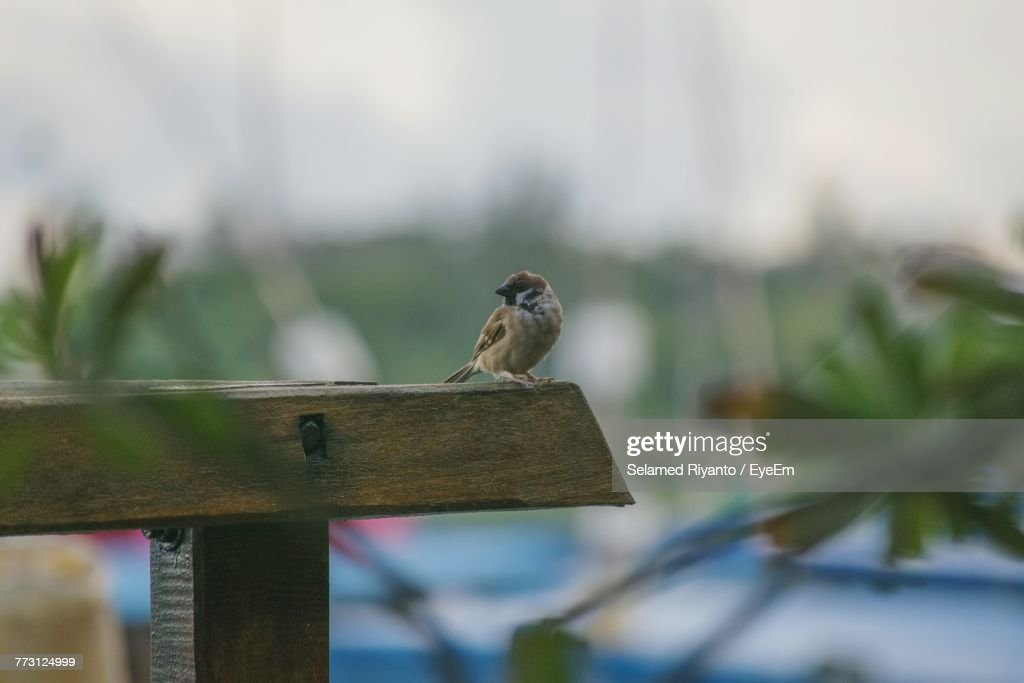 Close-Up Of Bird Perching On Wooden Post : Photo