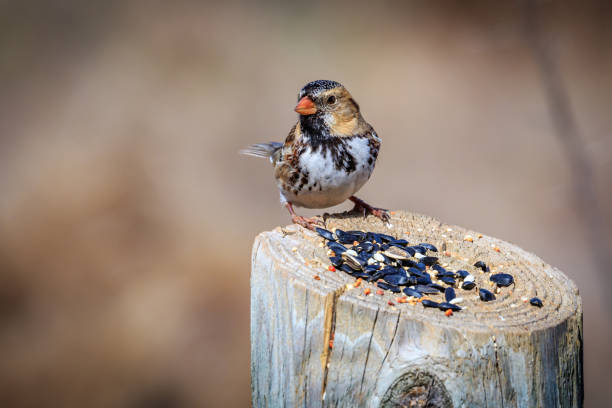 Close-up of bird perching on wooden post,Autumn Creek Dr,United States,USA