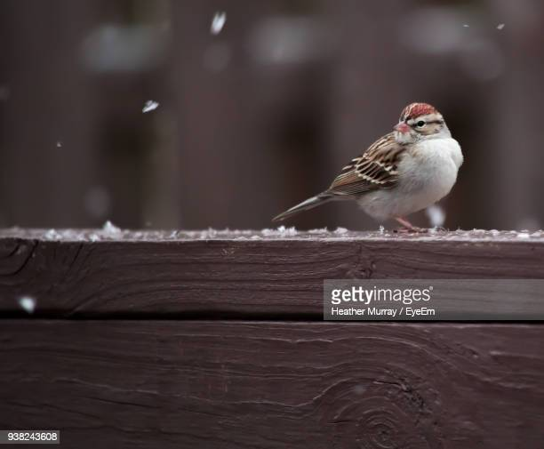 Close-Up Of Bird Perching On Wooden Railing During Winter