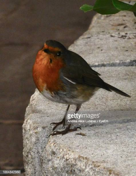 close-up of bird perching outdoors - vertebrate stock pictures, royalty-free photos & images
