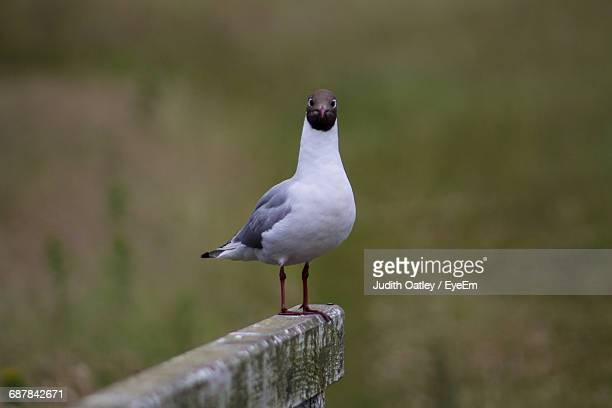 close-up of bird perching outdoors - judith gray stock pictures, royalty-free photos & images