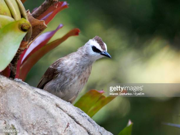 close-up of bird perching outdoors - marek stefunko stock pictures, royalty-free photos & images