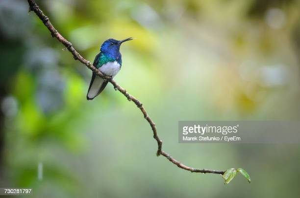 close-up of bird perching outdoors - marek stefunko stock photos and pictures