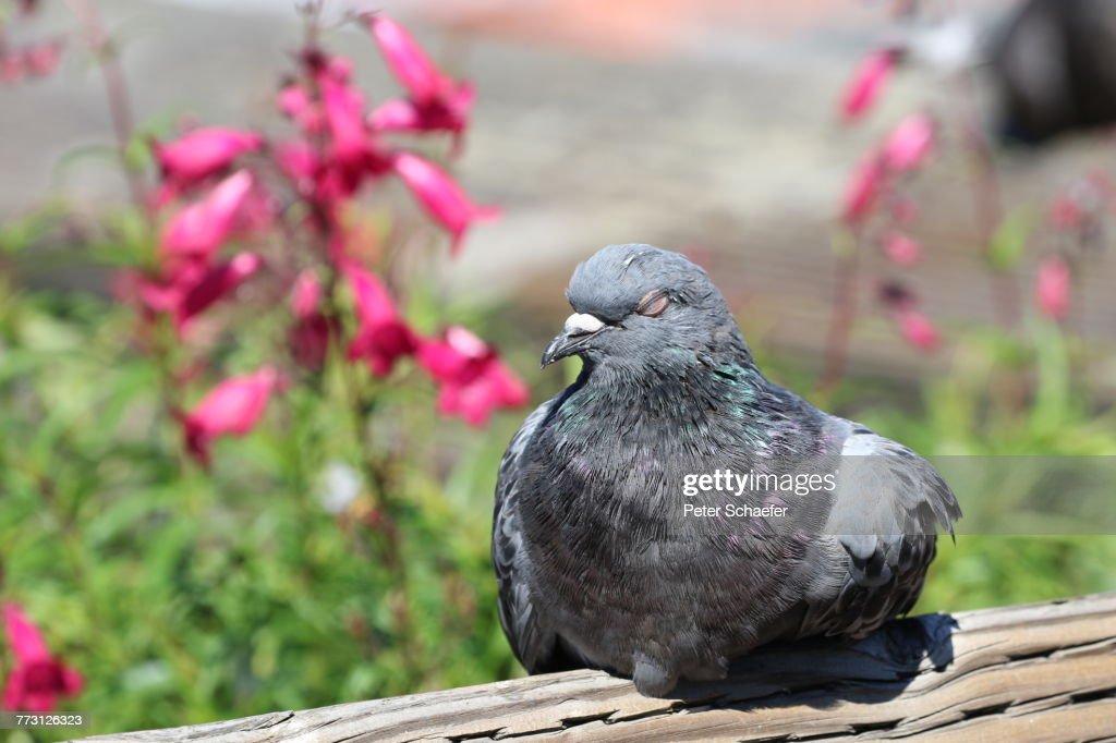 Close-Up Of Bird Perching Outdoors : Photo