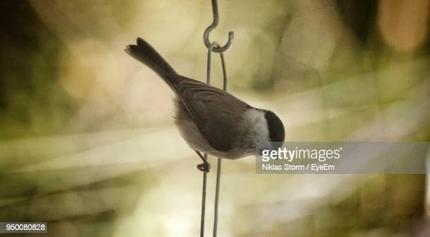 close-up of bird perching outdoors - niklas storm eyeem stock photos and pictures