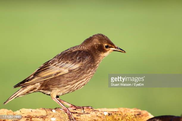 close-up of bird perching - taunton somerset stock pictures, royalty-free photos & images