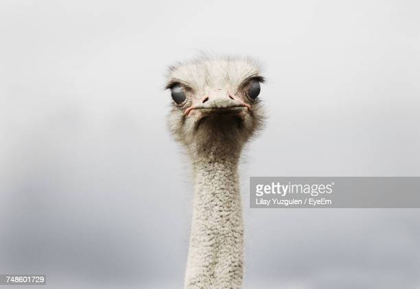 close-up of bird - ostrich stock pictures, royalty-free photos & images
