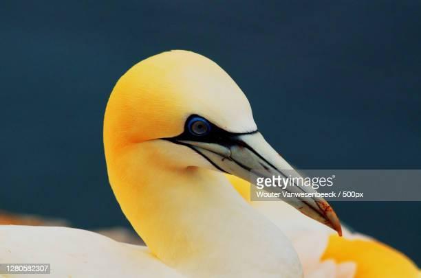 close-up of bird,helgoland,germany - tierbauten stock-fotos und bilder