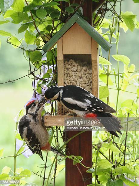 close-up of birds at birdfeeder - michael hruschka stock pictures, royalty-free photos & images
