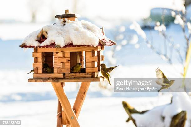close-up of birds by birdhouse during winter - birdhouse stock pictures, royalty-free photos & images