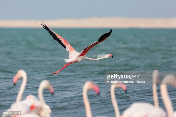 close-up of birds flying over sea,bahrain - gulf countries stock pictures, royalty-free photos & images